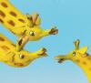 sea_bright: Giraffes group
