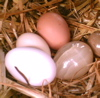 Eggs from the Goils