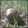 Snaily!