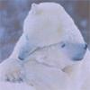 hugs, polar