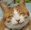 cats: kittysmile