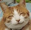 cats: kittysmile
