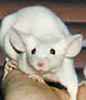 margo_mouse userpic