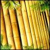 bambupaa userpic