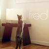 Plin: Fred