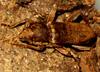 beetleblog userpic