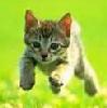 kitten_tamer userpic