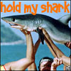 hold my shark