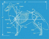 dog blueprint