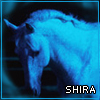 shira userpic