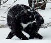 Хэлкаракснутый_кот