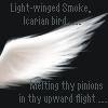 Icarian Bird :: ME