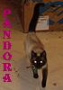 pandora_cat userpic