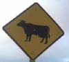 happycow1 userpic