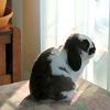 kiwi_the_bun userpic