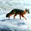 sennawolf userpic
