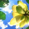 redvalkyrie userpic