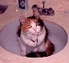 Butterscotch in the sink