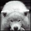 cliftonwolf userpic
