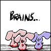 [bunny] brains....