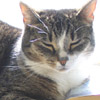 celeste_the_cat userpic