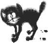 catus userpic