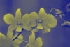 orchids_lilies userpic