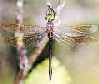 sage_dragonfly userpic