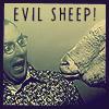 Evil Sheep!