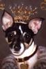 Queen Dog Face