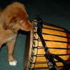 djembe_drummer