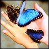 Blue Flutterbies