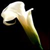 nicoandcream userpic