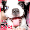 For-Chan Cookie: Niku says