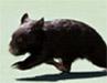 wombats userpic