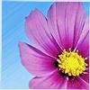 Ezz Valdez: flower