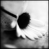 pink_ragdoll userpic