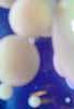 porousmountain userpic