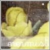 evermist userpic