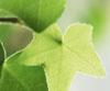 vineyivy userpic