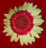 lamasong userpic