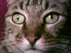 glitter__kitty userpic