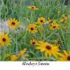 bit_o_sunshine userpic
