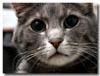 Кот-Задумчивый