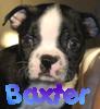 Rachel Leigh: Baxter By: look_its_alana