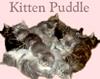 kitten puddle