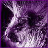 why's everything gotta be so intense with me: purple porcupine