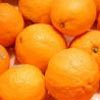 orangeaddict userpic
