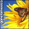 gonetomexico userpic