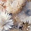 driedflower userpic